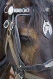Cavallo del lavoro fotografia stock libera da diritti