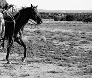 CAVALLO DEL RANCH IN BIANCO E NERO immagini stock libere da diritti