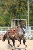 Cavallo del rodeo Immagini Stock Libere da Diritti