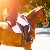 Cavallo dell'acetosa con il cavaliere ai concorsi di dressage Fotografie Stock