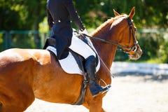Cavallo dell'acetosa con il cavaliere ai concorsi di dressage Fotografia Stock Libera da Diritti