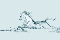 Cavallo dell'acqua Fotografia Stock
