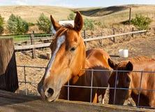 Cavallo dell'azienda agricola immagini stock