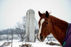 Cavallo dell'azienda agricola in natura Fotografie Stock Libere da Diritti