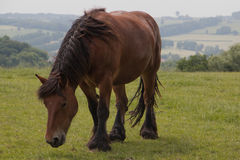 Cavallo dell'azienda agricola in natura Fotografia Stock Libera da Diritti