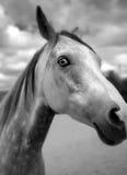 Cavallo dell'occhio della parete Immagine Stock