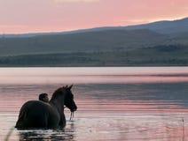 Cavallo della castagna e la ragazza in acqua Immagini Stock