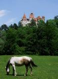 Cavallo della crusca Immagine Stock