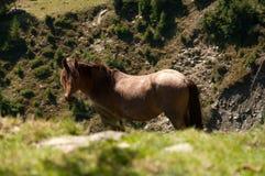 Cavallo della montagna Fotografia Stock Libera da Diritti