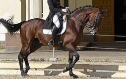 Cavallo della puleggia tenditrice Immagini Stock Libere da Diritti