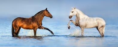 Cavallo delle coppie in oceano fotografia stock