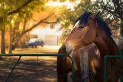 Cavallo delle curiosità Fotografie Stock