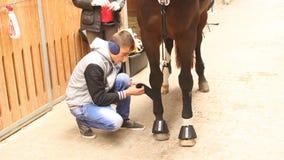 Cavallo delle gambe di bendaggio video d archivio