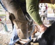cavallo dello zoccolo del farrier di residuo della potatura meccanica Fotografia Stock Libera da Diritti