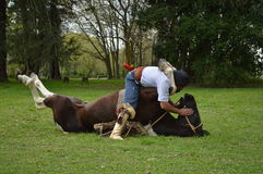 Cavallo di addestramento Fotografia Stock Libera da Diritti