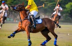 Cavallo di arresto del giocatore di polo Fotografia Stock