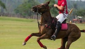 Cavallo di arresto del giocatore di polo Fotografia Stock Libera da Diritti