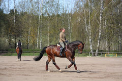 Cavallo di baia biondo di guida della donna Immagine Stock Libera da Diritti
