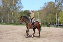 Cavallo di baia biondo di guida della donna Fotografia Stock