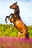 Cavallo di baia che si eleva in su sulla priorità bassa floreale Fotografia Stock