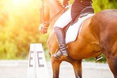Cavallo di baia con il cavaliere ai concorsi di dressage Fotografie Stock