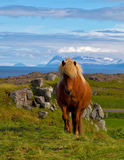 Cavallo di baia lucido dell'agricoltore Fotografia Stock Libera da Diritti