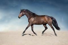 Cavallo di baia nel moto fotografia stock