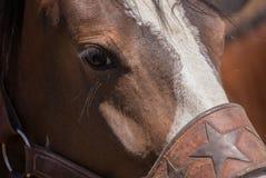 Cavallo di Bronco Fotografia Stock