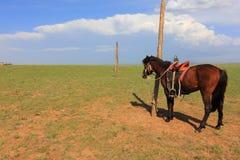 Cavallo di Brown Fotografie Stock Libere da Diritti