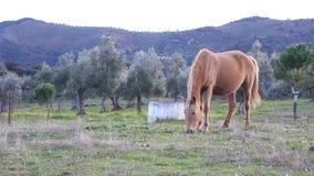 Cavallo di Brown che pasce video d archivio