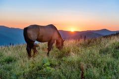 Cavallo di Brown che pasce su un campo fotografie stock libere da diritti