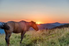 Cavallo di Brown che pasce su un campo fotografie stock