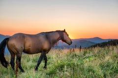 Cavallo di Brown che pasce su un campo fotografia stock libera da diritti