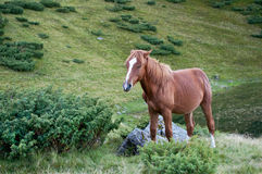 Cavallo di Brown che sta vicino ad una roccia Fotografia Stock