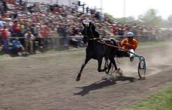 Cavallo di Brown con il trasporto e cavaliere nel moto immagine stock libera da diritti