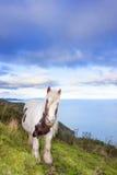 Cavallo di Brown e di bianco sulla montagna Fotografia Stock