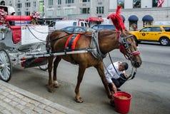 Cavallo di Brown e secchio rosso sul Central Park fotografia stock