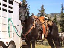 Cavallo di Brown in sella occidentale Fotografia Stock