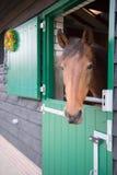 Cavallo di Brown in stalla Fotografia Stock