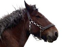 Cavallo di cambiale pensionato Immagini Stock Libere da Diritti