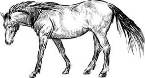 Cavallo di camminata Fotografia Stock Libera da Diritti