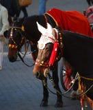 Cavallo di carrello con gli otoprotettori del crochet Immagine Stock