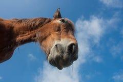 Cavallo di colpo in testa, Spagna, Camino de Santiago fotografia stock libera da diritti
