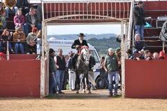 Cavallo di combattimento di toro Fotografie Stock