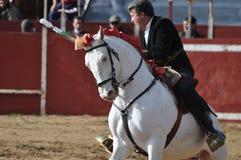 Cavallo di combattimento di toro Immagini Stock Libere da Diritti