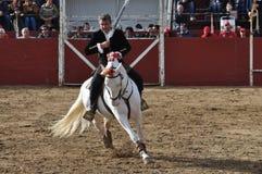 Cavallo di combattimento di toro Immagine Stock