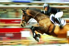 Cavallo di corsa Immagine Stock Libera da Diritti