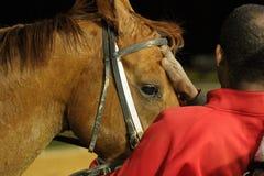 Cavallo di corsa dopo l'ippica Immagine Stock Libera da Diritti