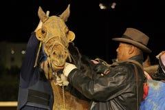 Cavallo di corsa dopo l'ippica Fotografia Stock Libera da Diritti