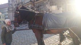 Cavallo di Dresda Immagini Stock